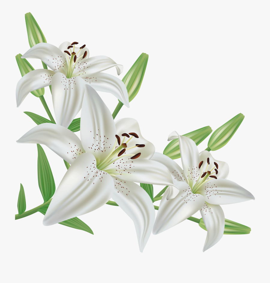 Cliparts For Free - White Lily Flower Png, Transparent Clipart