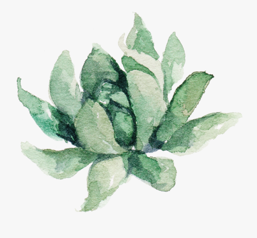 Clipart Free Transparent Succulent Watercolor - Transparent Succulent Clipart, Transparent Clipart