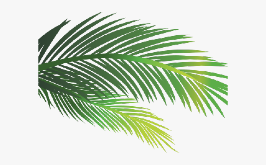 Sauna Clipart Palm Tree, Transparent Clipart