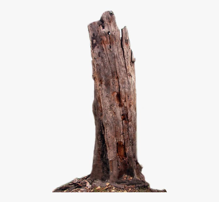 Transparent Tree Hd Png - Dead Tree Trunk Png, Transparent Clipart