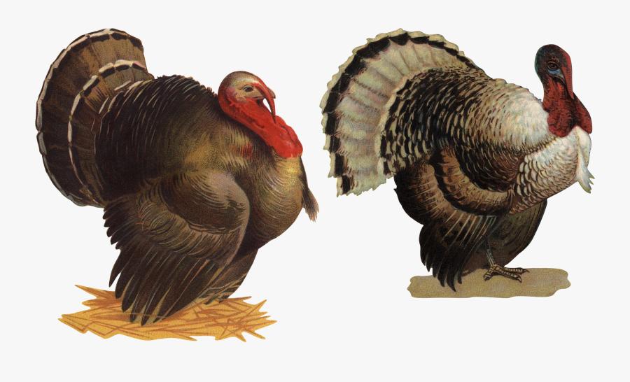 Turkey Bird Png, Transparent Clipart