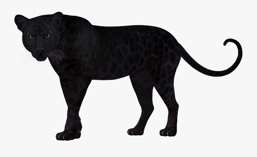 Panther Leopard Lion Felidae Cheetah - Leopard Clipart Silhouette, Transparent Clipart