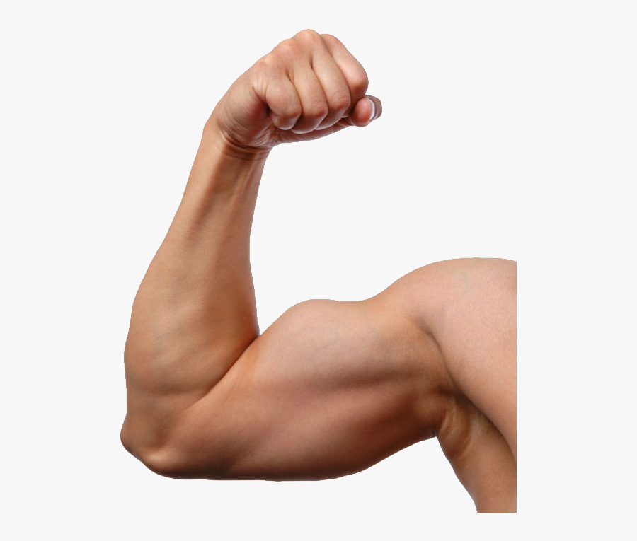 Png Image Purepng Free Cc Library Man Arm- - Transparent Background Muscle Arms Transparent, Transparent Clipart