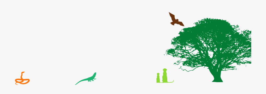 Footer-graphics - Oak Tree Silhouette Png, Transparent Clipart