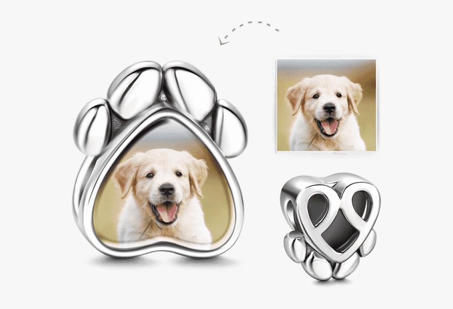 Labrador Retriever, Transparent Clipart