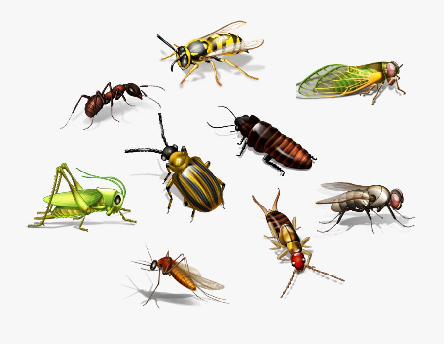 Flies Clipart Harmful Insect - Insects Name In Hindi, Transparent Clipart