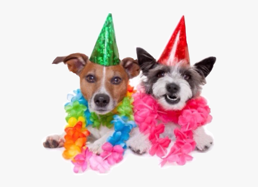 Transparent Party People Png - Best Friend Happy Birthday Dogs, Transparent Clipart