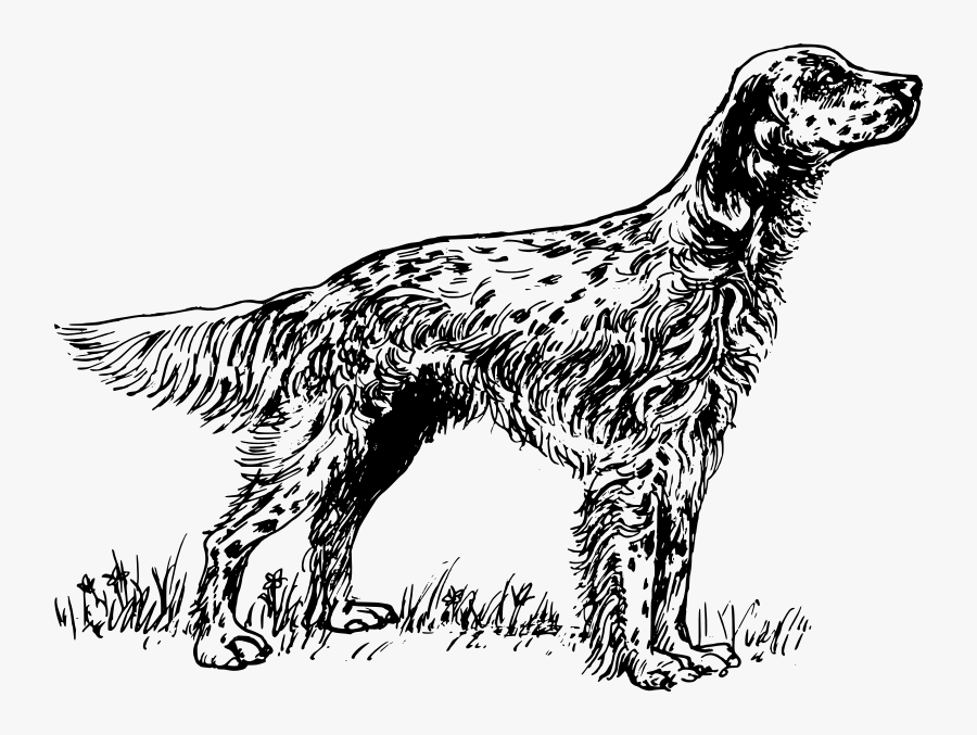 English Setter Coloring Pages, Transparent Clipart