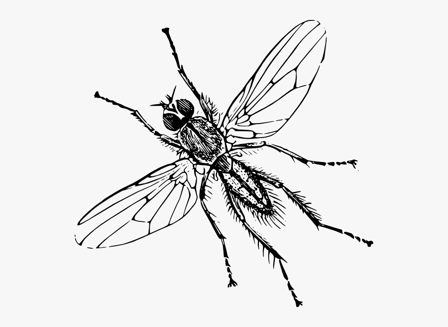 Clip Art Image Of Insect, Transparent Clipart