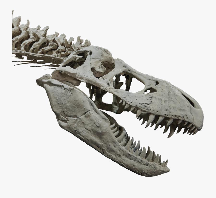 T Rex Skull Png - T Rex Head Skeleton, Transparent Clipart