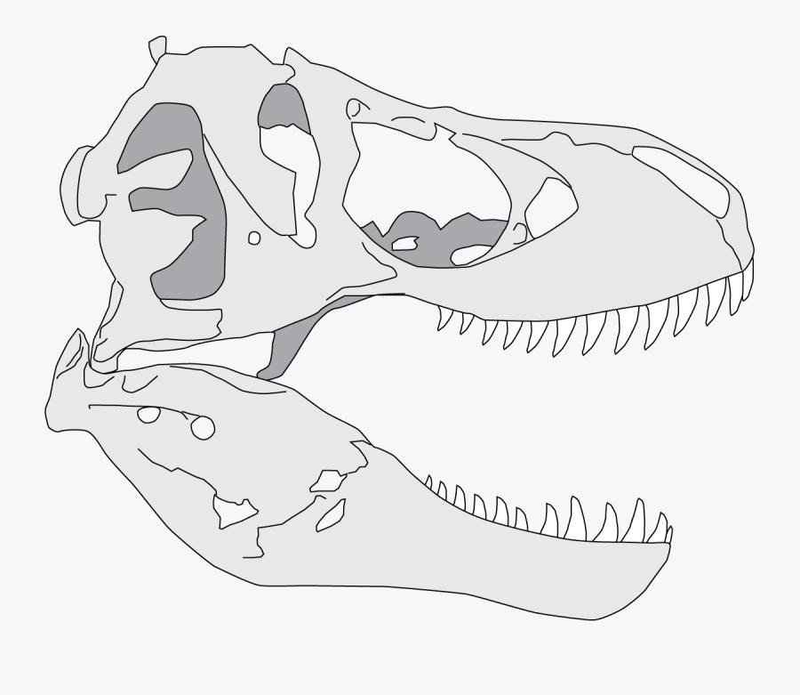 Drawn Dinosaur Skull - T Rex Skull Drawing Simple, Transparent Clipart