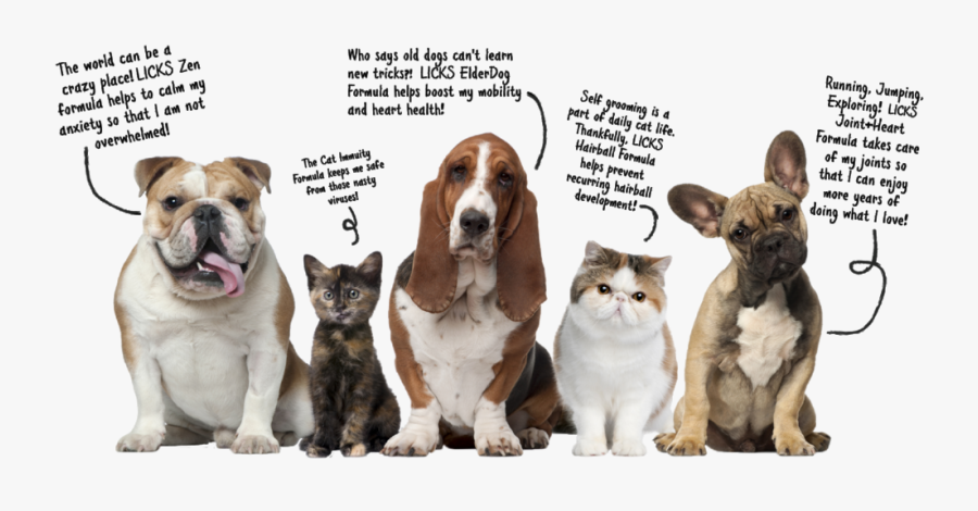 Pets Talking Graphic R1-bold - 5 Picture Of Animals, Transparent Clipart