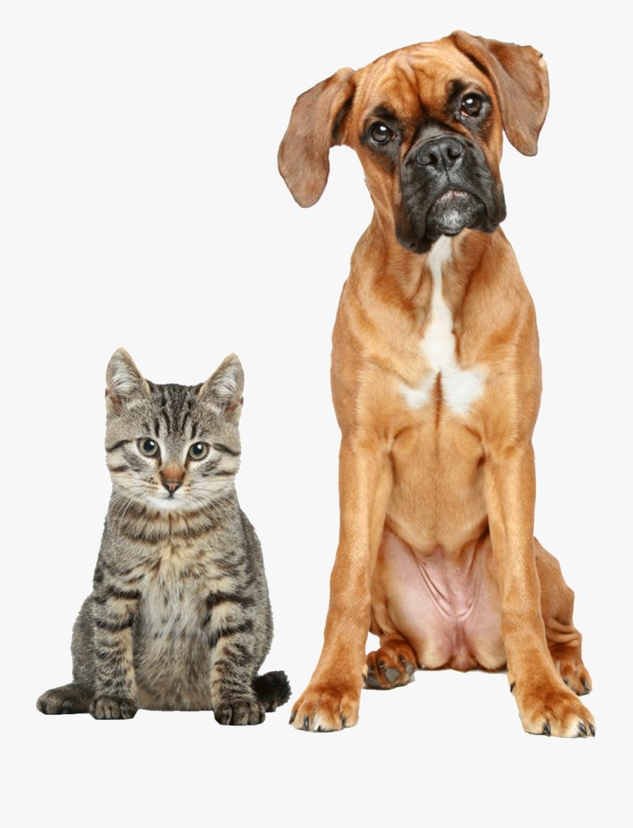 Bulldog Love Stock Illustrations – 2,462 Bulldog Love Stock Illustrations,  Vectors & Clipart - Dreamstime