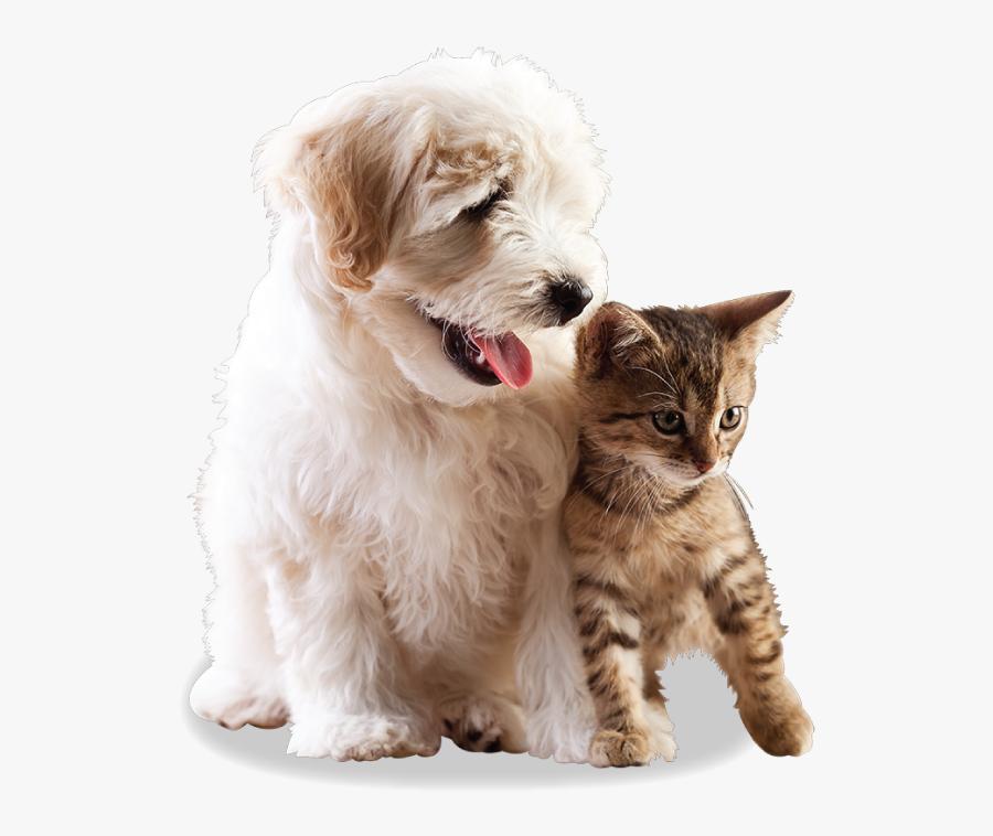 Pdf Brochure Pulse Oximeter Veterinary, Transparent Clipart