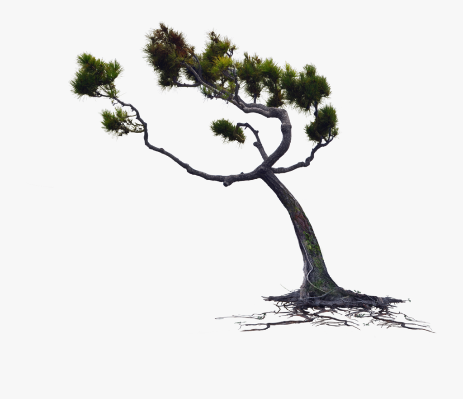 Blowing Wind Png - Tree Blowing In The Wind Png, Transparent Clipart