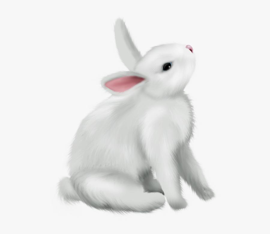 Transparent Rabbits Png - Bunny Rabbit Png, Transparent Clipart