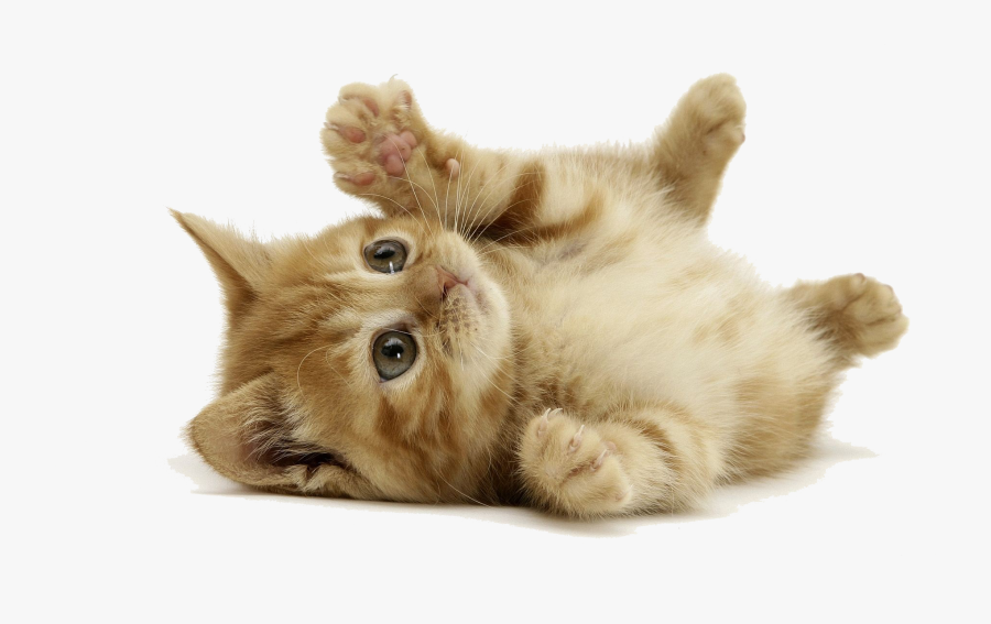 Kitten Playing Png - Very Cute Cats, Transparent Clipart