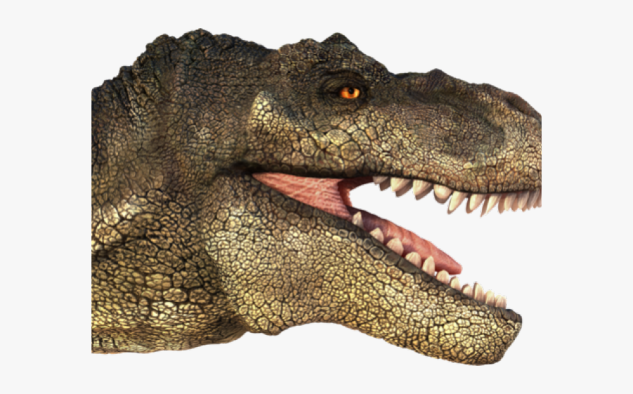 Tyrannosaurus Rex Clipart Transparent - T Rex Head Png, Transparent Clipart