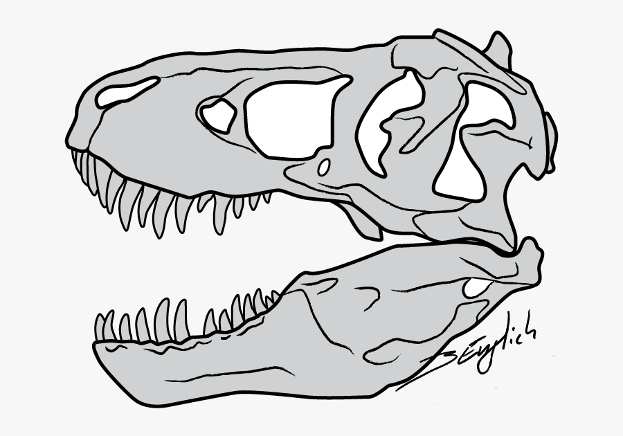 Clip Black And White Clipart Face T Rex Free For Download - T Rex Bones Drawing, Transparent Clipart