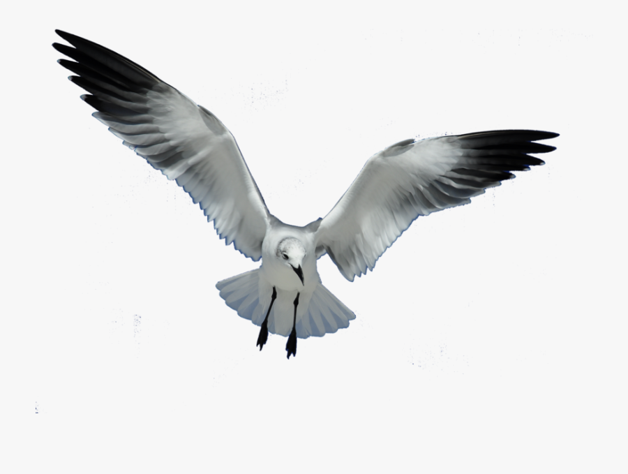 Great Work Clip Art Download - Seagull Png, Transparent Clipart