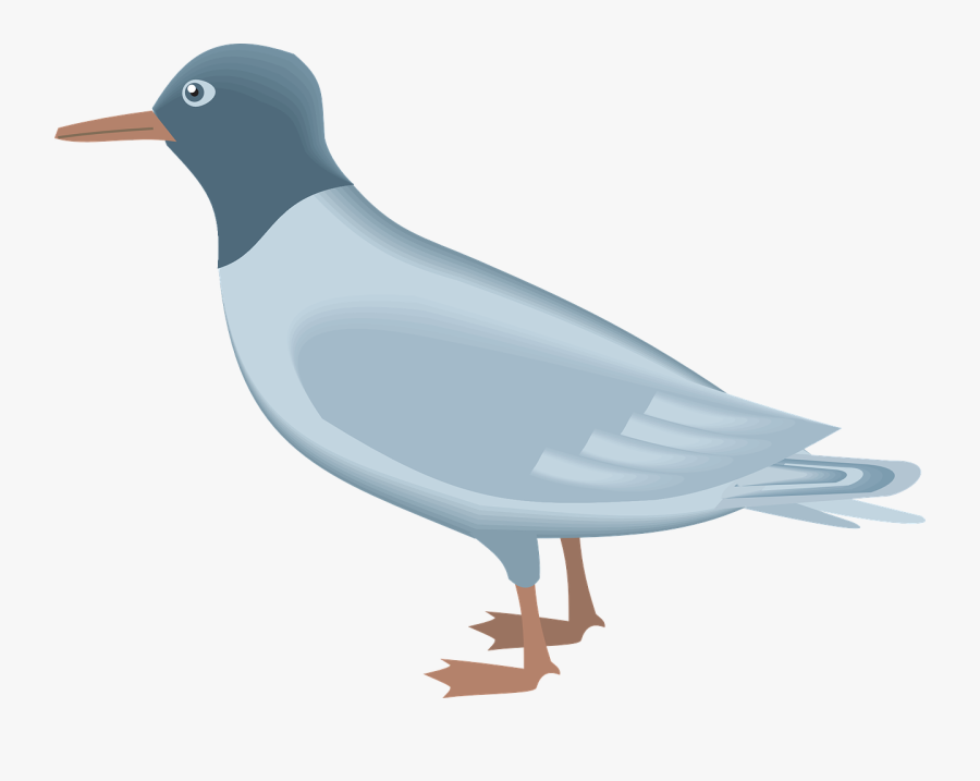22 224345 gull png gambar burung camar kartun