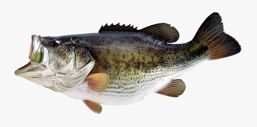 Clip Art Check Back Daily Always - Big Fish No Background, Transparent Clipart