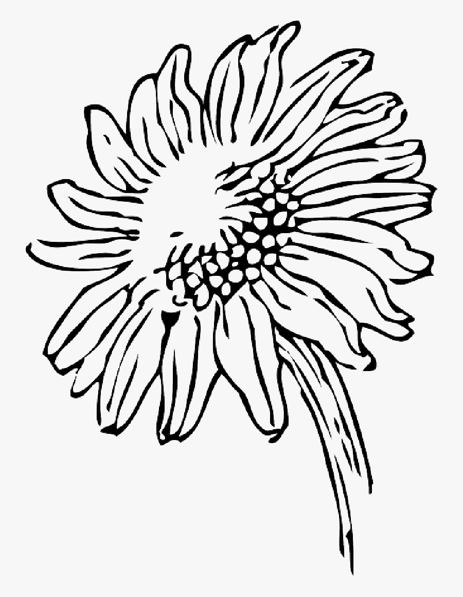 Sun Drawing Black And White At Getdrawings - Sunflower ...