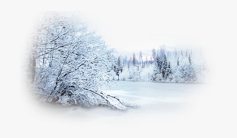 Winter Desktop Wallpaper Photography Snow Clip Art - Forest Snowy Tree Transparent Background, Transparent Clipart