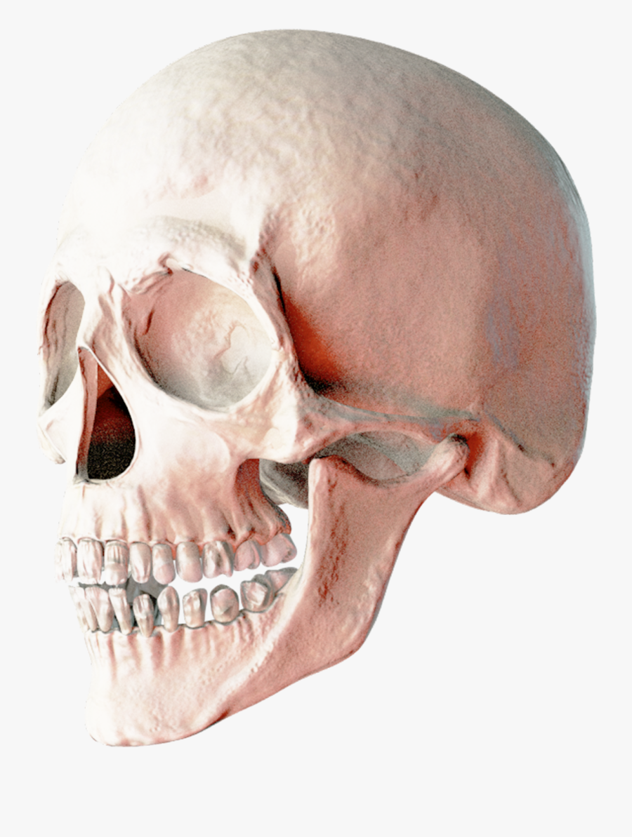 Head Hd Transparentpng - 2 Skulls Png, Transparent Clipart