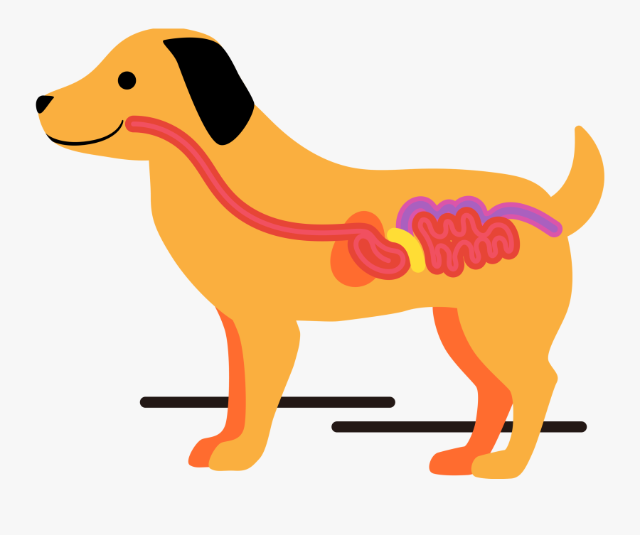When The Gut Is Healthy, Everything Else Falls Into - Ancient Dog Breeds, Transparent Clipart