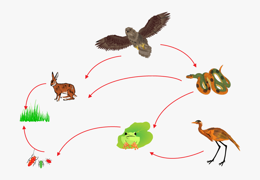 Food Chain Biological Circle Of Nature - Food Chain , Free ...