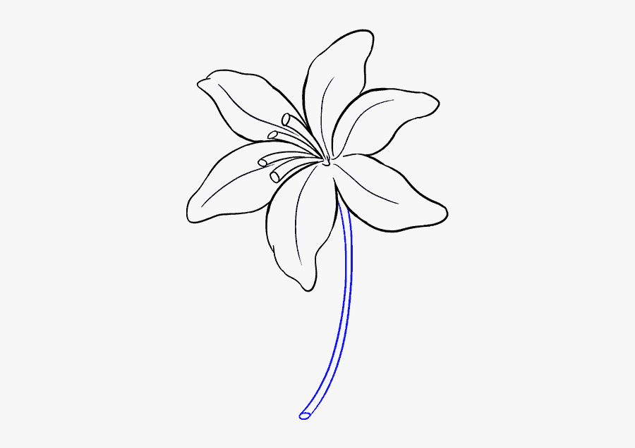 How To Draw Lily Lily Flower Drawing Easy Free Transparent Clipart Clipartkey