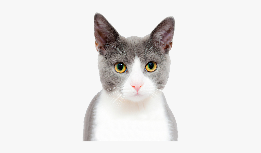 Kitten Face Png - Cute Cat On A Transparent Background, Transparent Clipart