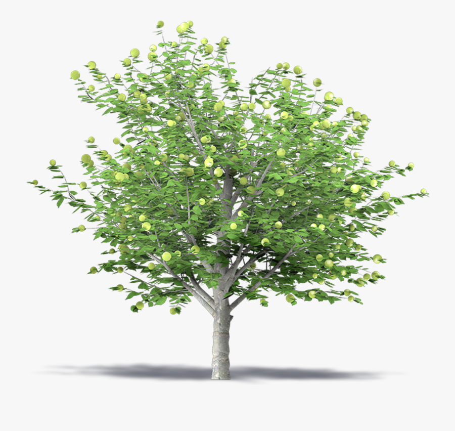 Apple Tree 3d Png - Green Apple Tree Png, Transparent Clipart
