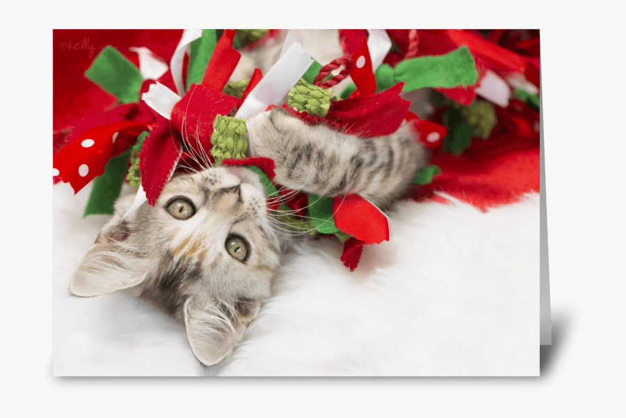 Christmas Kitten Png - British Shorthair, Transparent Clipart