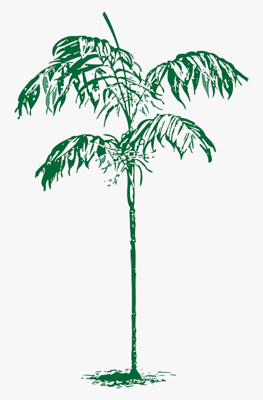 Sketch Palm Tree Png, Transparent Clipart