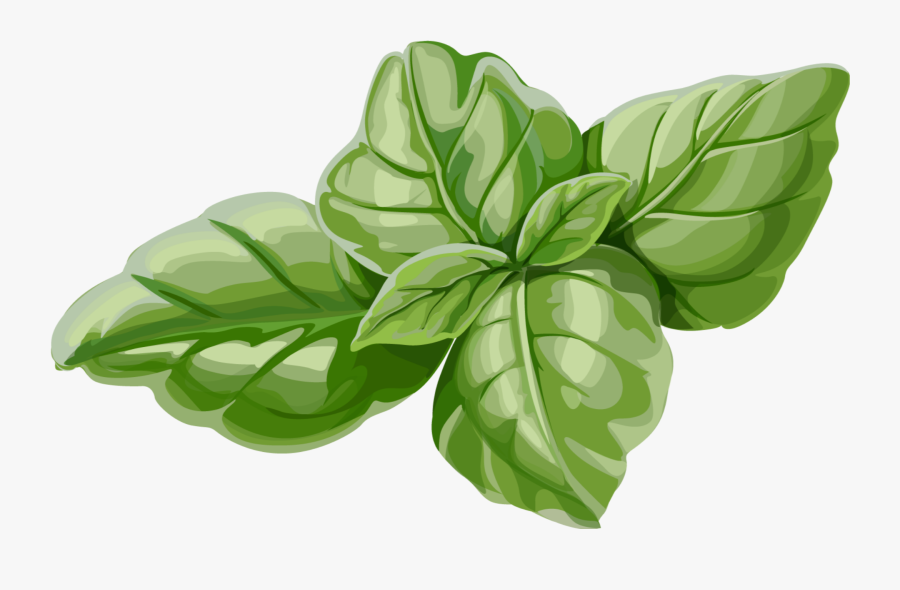 #mq #green #leaf #leaves #mint - Mint Leaves Illustration, Transparent Clipart