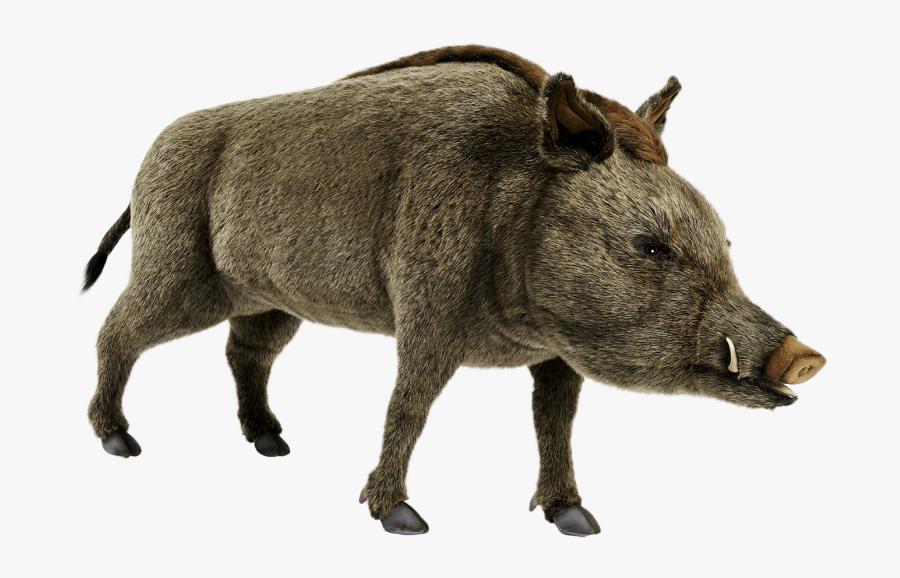 Wild Boar Transparent Background, Transparent Clipart