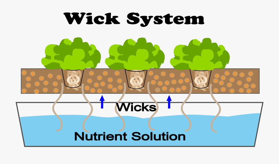 The Wick System Irrigates The Plants Via A Candle Wick - Wick System Hydroponics, Transparent Clipart