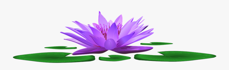 Water Lily, Lake, Pond, Nature, Blossom, Bloom, Water - Sacred Lotus, Transparent Clipart