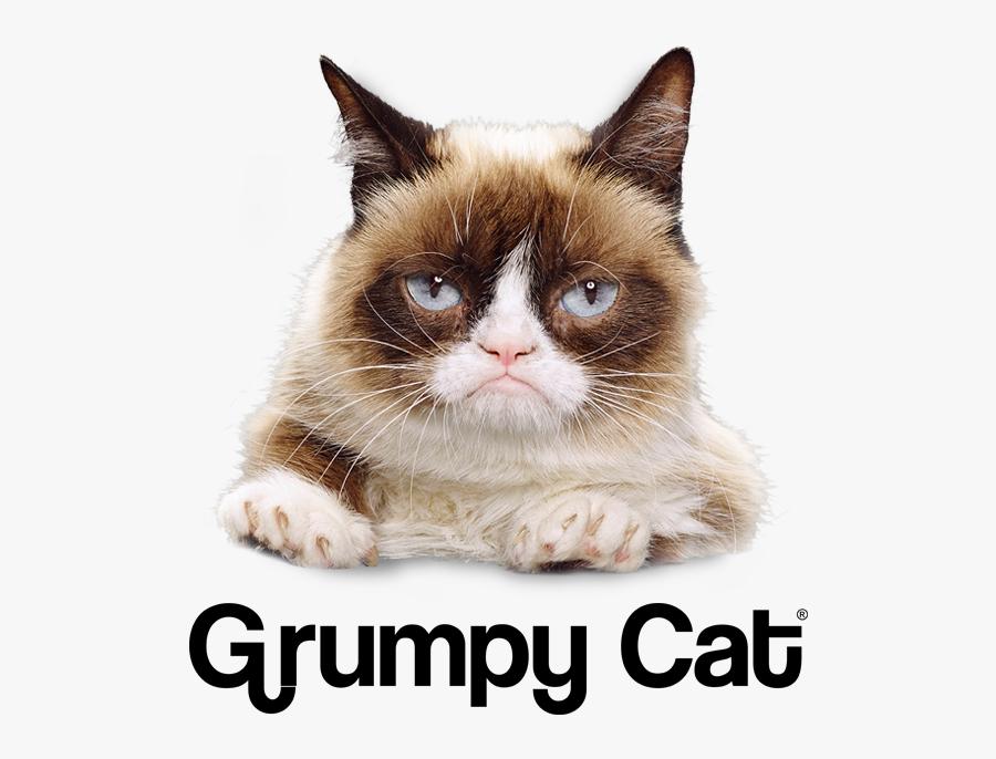Clip Art Grumpy Cat Png - Grumpy Cat Lottery Tickets, Transparent Clipart
