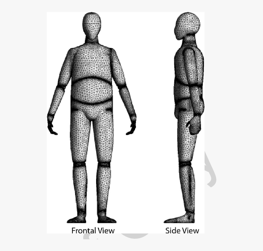 Human Figure Png - Computer Model Of Human Body, Transparent Clipart