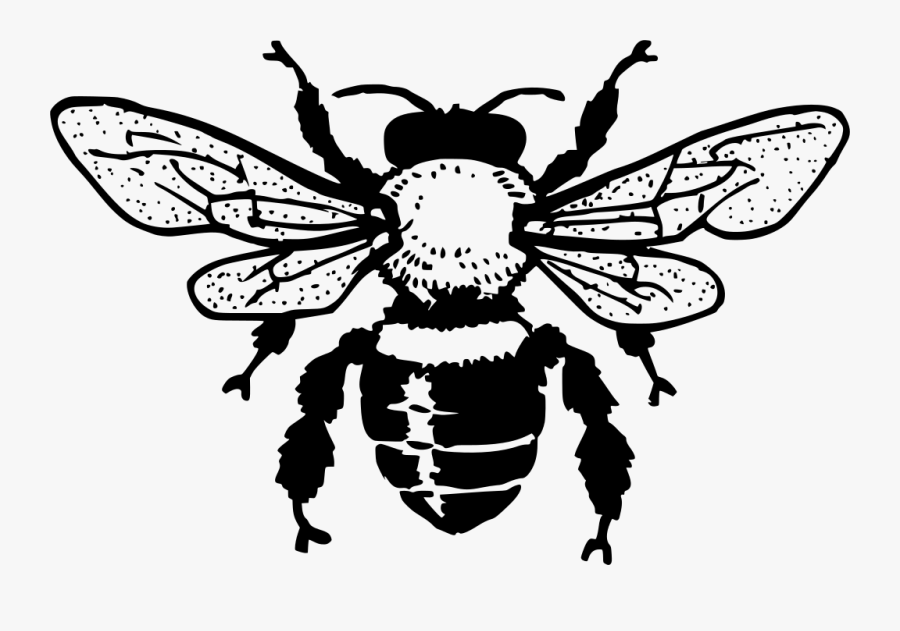 Honey Bee Black And White Clipart , Png Download - Free Bee Clipart Black And White, Transparent Clipart