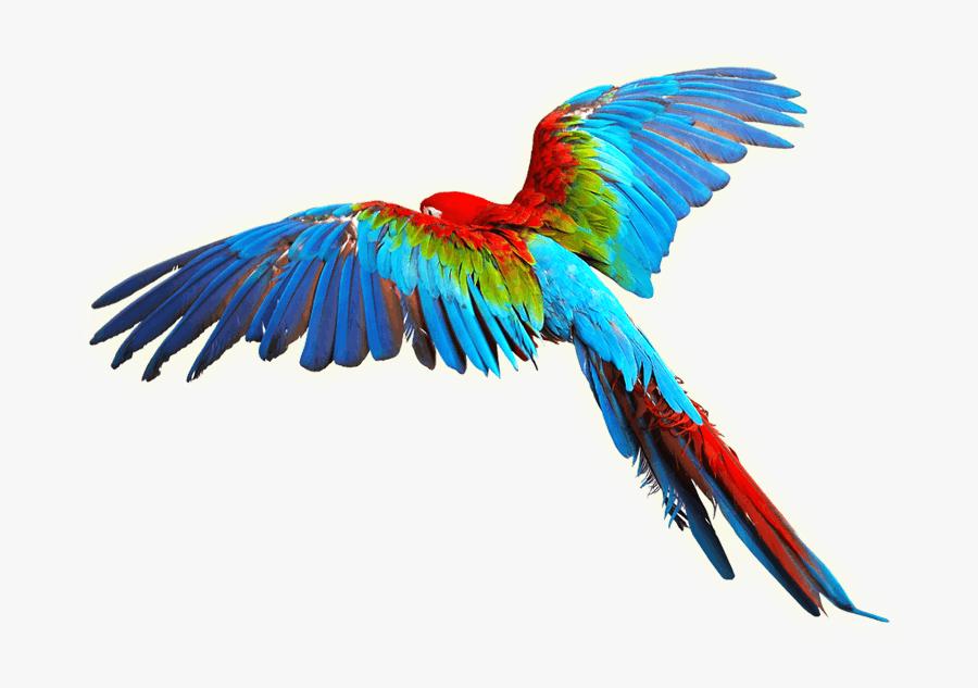 Macaw Clip Art