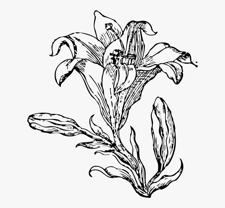 Transparent Holy Thursday Clipart - Flower Line Art Png, Transparent Clipart
