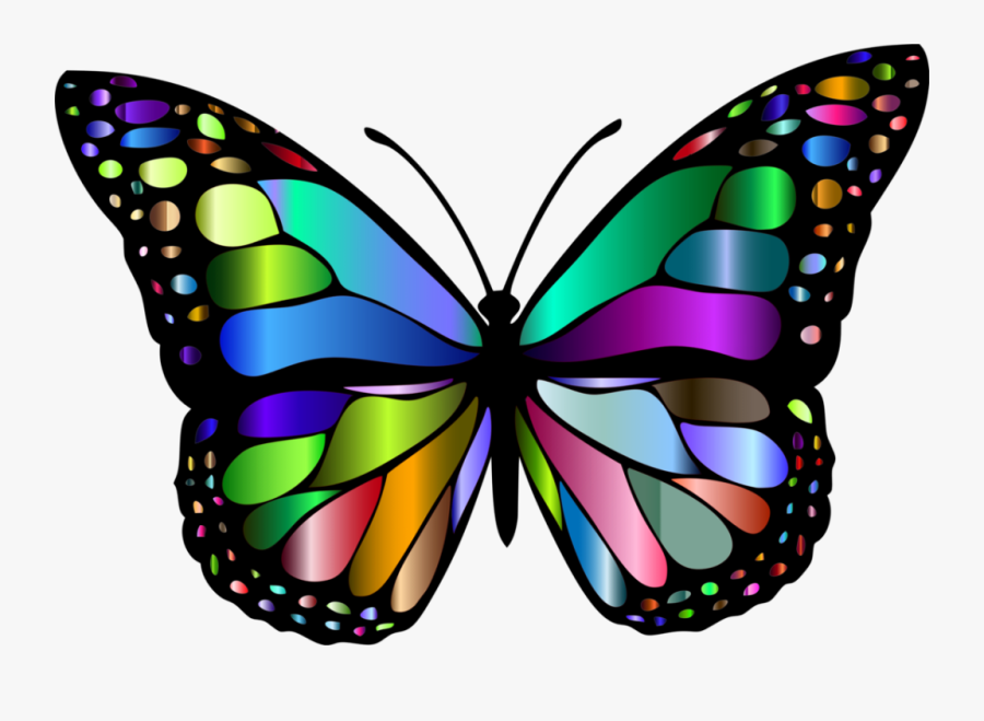 Butterfly Pictures Of Insects, Transparent Clipart