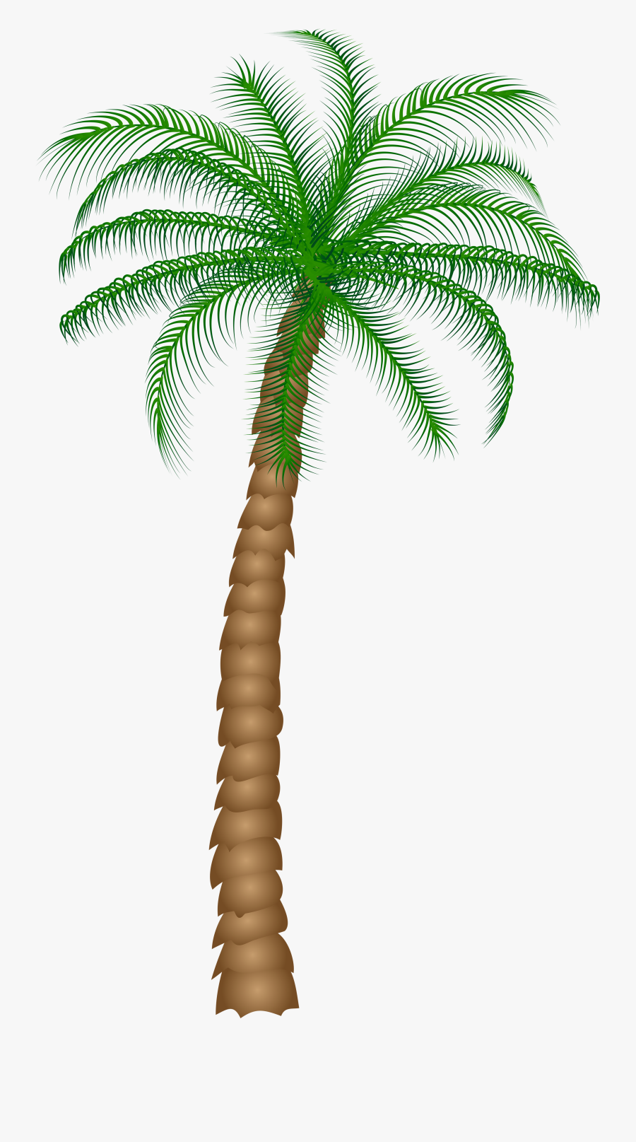 Date Palm Fruit Tree Clipart - Palm Tree Transparent Background, Transparent Clipart