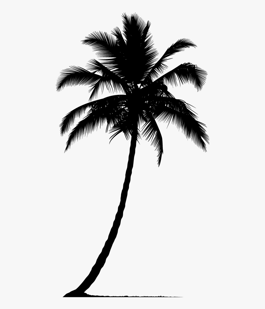 Arecaceae Silhouette Tree - Palm Tree Vector Png, Transparent Clipart