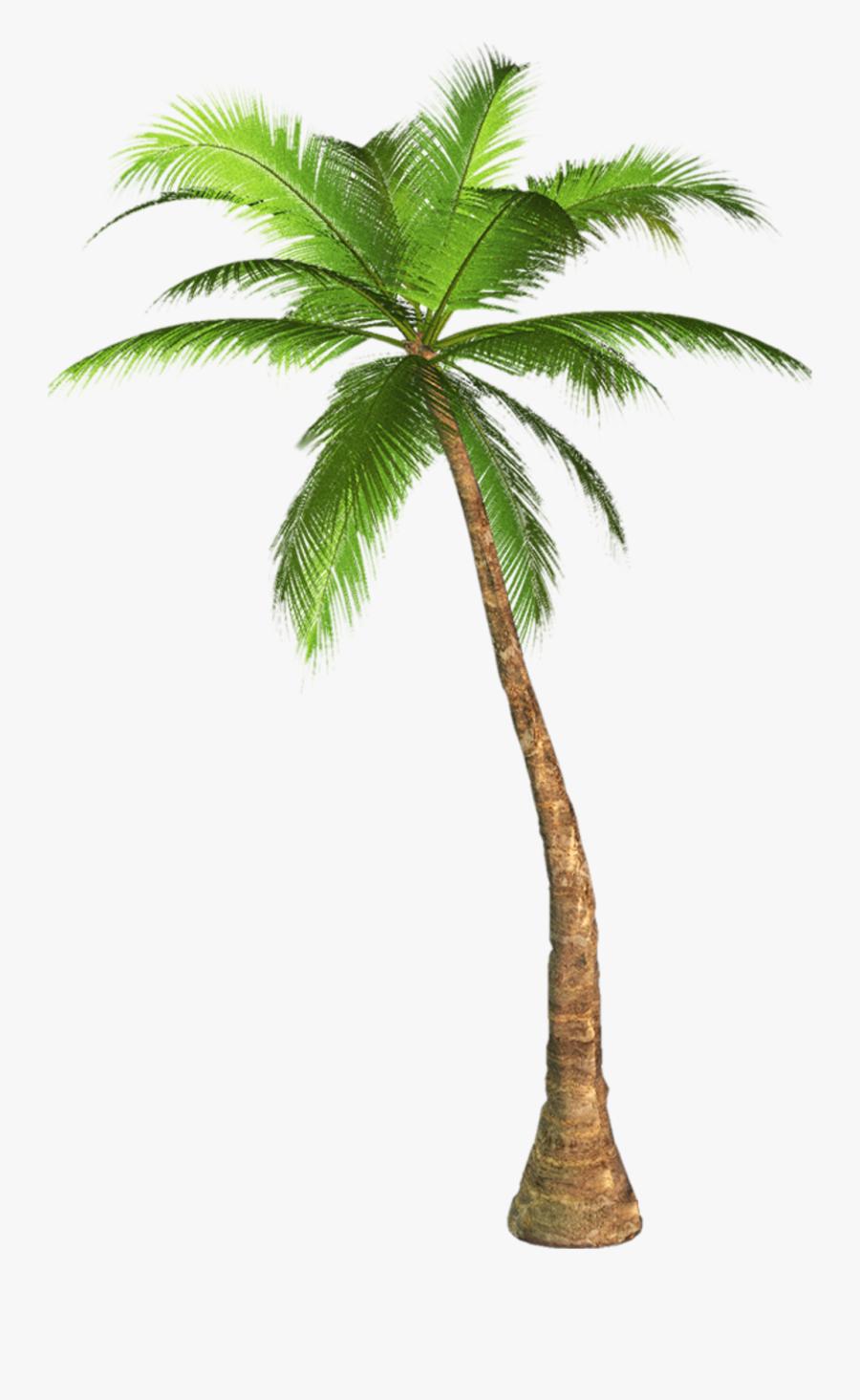 Arecaceae Tree Clip Art - Palm Tree Transparent Background, Transparent Clipart