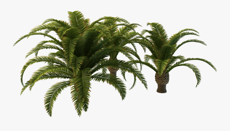 Long Palm Tree Clipart Png - Small Palm Tree Png, Transparent Clipart
